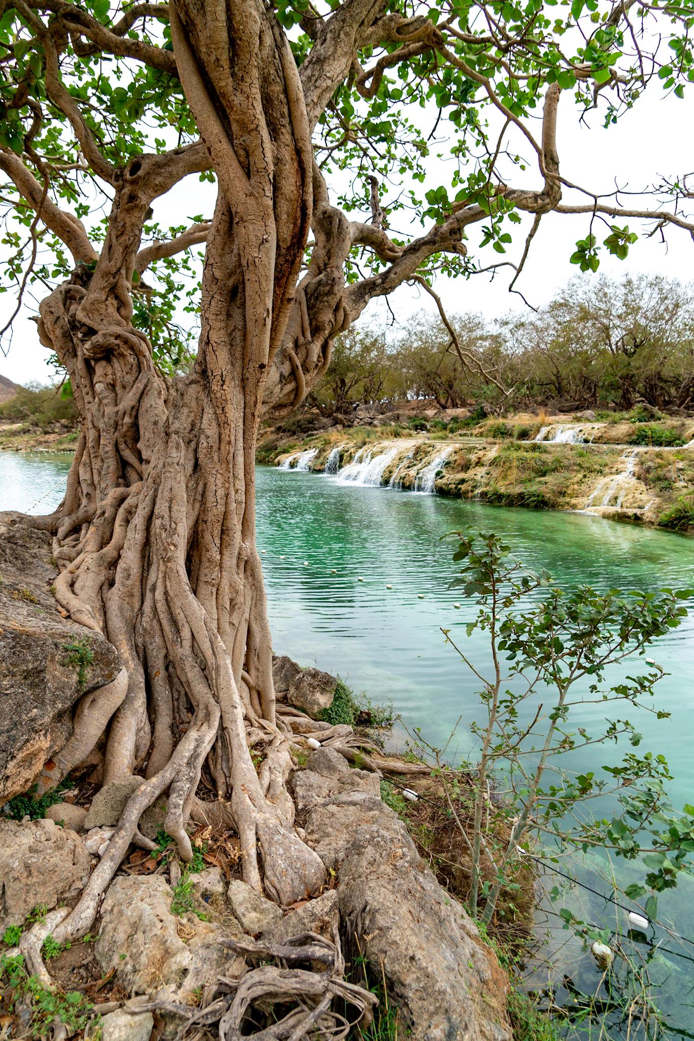 Dagtrip Salalah #1: Wadi Darbat en meer