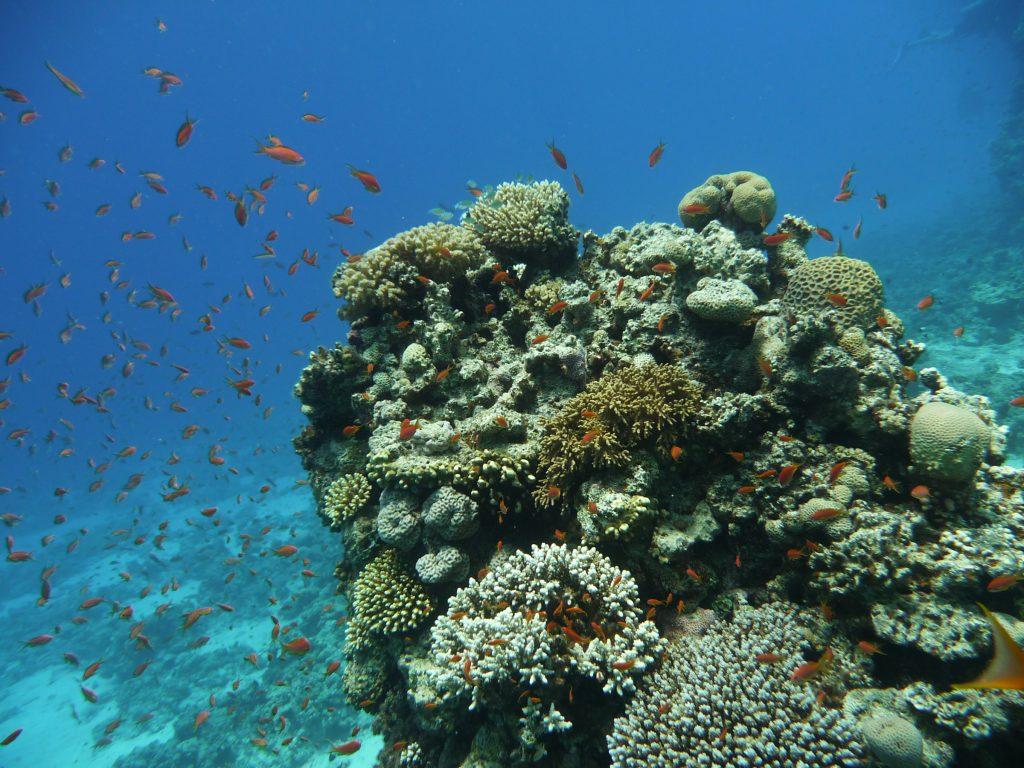 koraal met vissen Rode Zee, Egypte