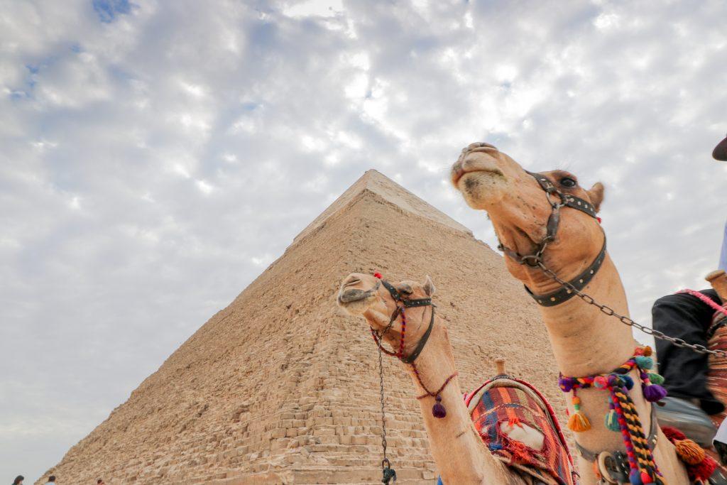 piramide met kamelen in Egypte