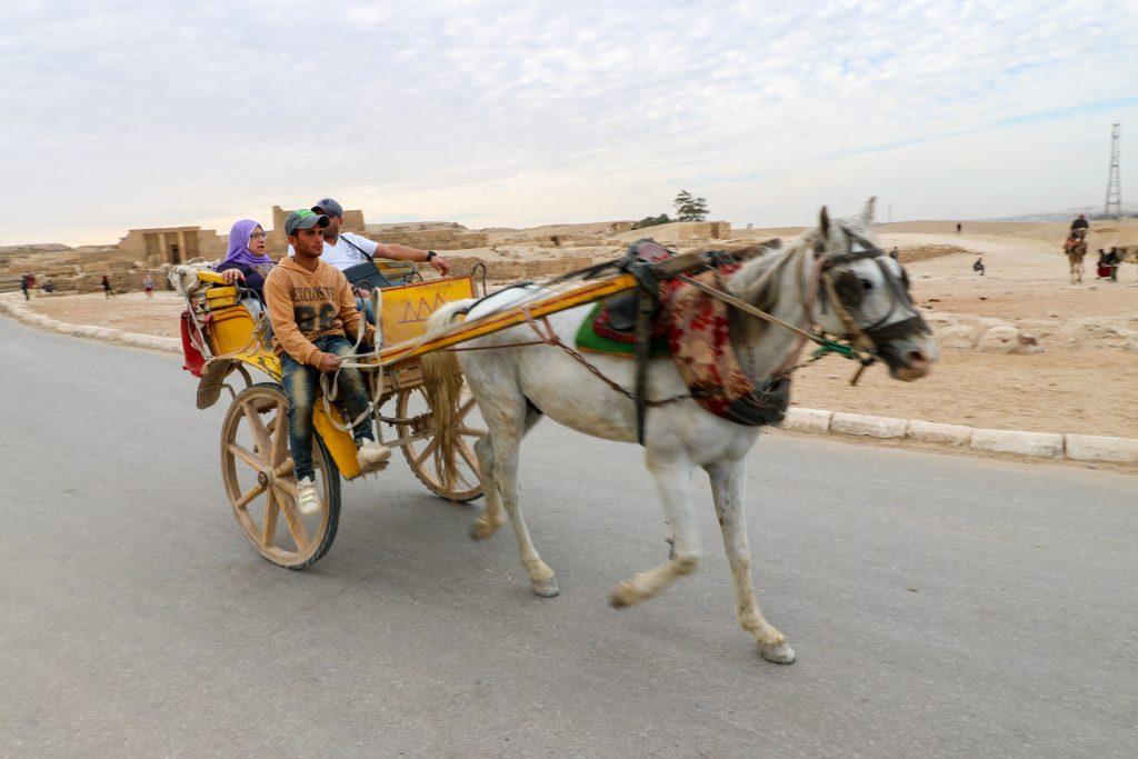 Horse and cart at the pyramids of Giza